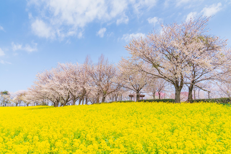 新潟県 上堰潟公園