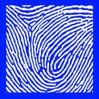 BLUE - WHITE