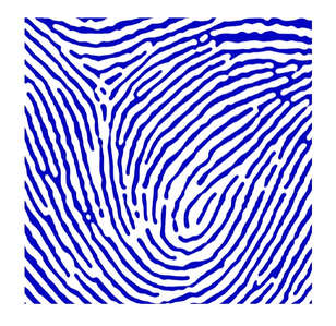 WHITE- BLUE