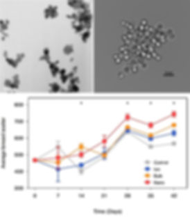 Nano paper pictures.jpg