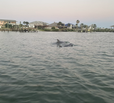 Dolphins on Get Together Boat Tour