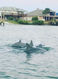Dolphins on Boat Tour, Saint Augustine