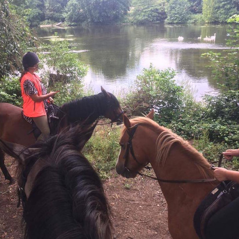 Hacks across beautiful countryside. Horse riding in North Norfolk.
