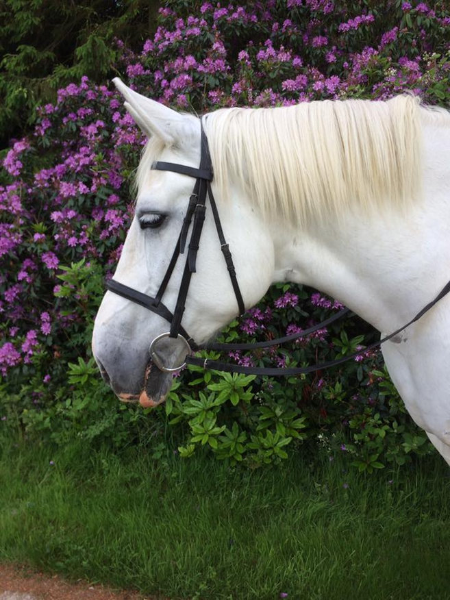 One of our beautiful horses during a fantastic hack across stunning countryside