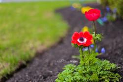 Flowers05.2mg