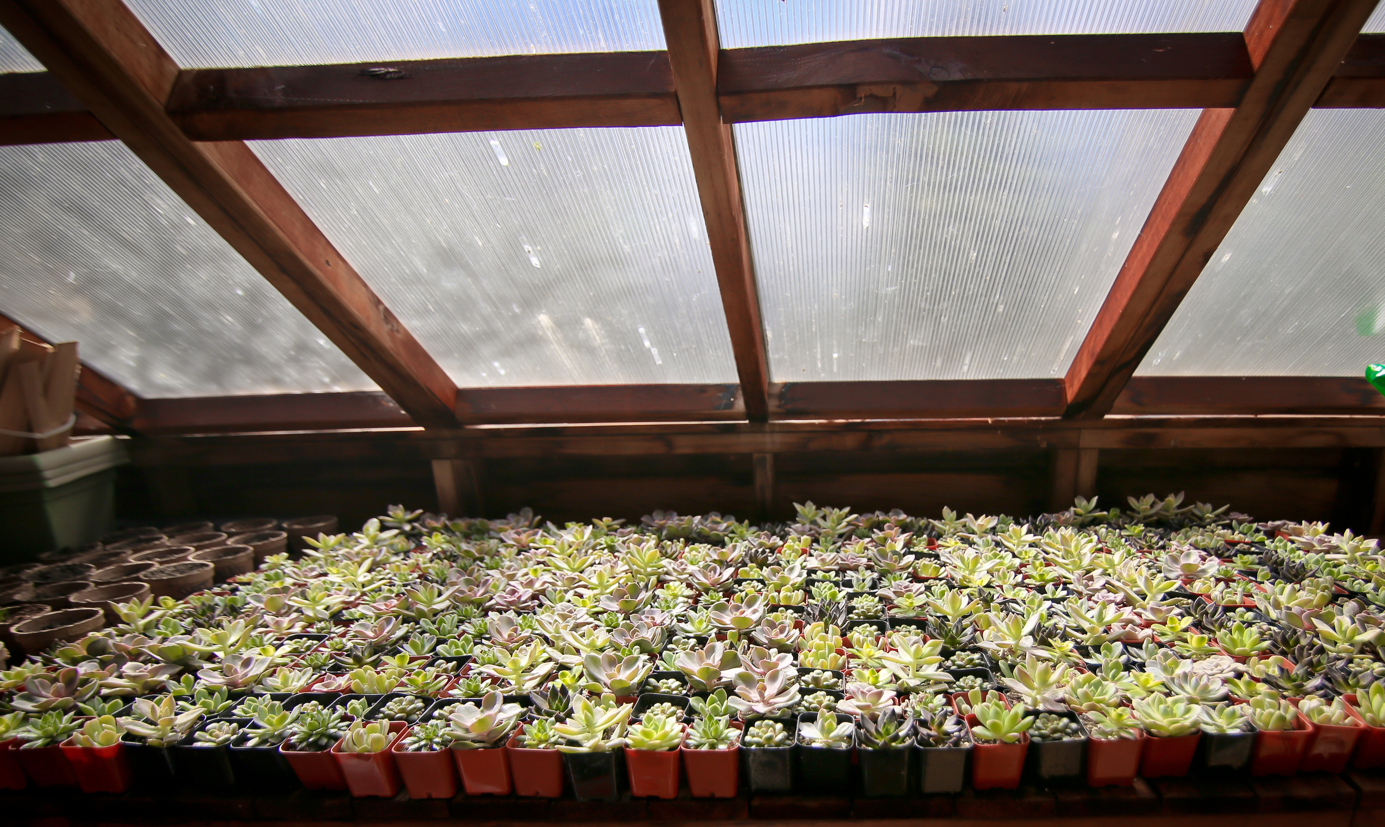 Succulents01
