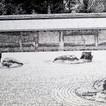 Zen Garden 1981