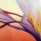 saffron small_edited.jpg