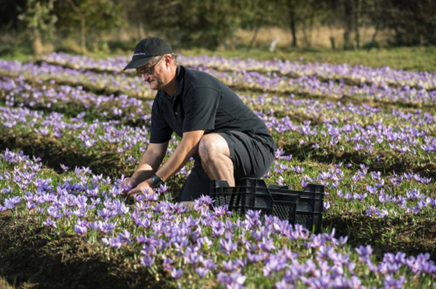 David in his Essex saffron field