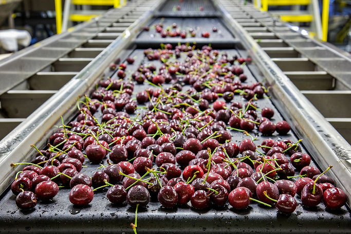 hart mi cherry processing.jpeg