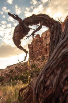 Wicked Twisted Red Rock // Ginny Cunningham — Photography