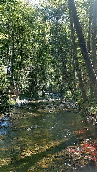 Bear creek perspective.jpg