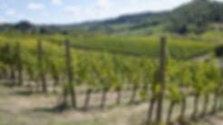 wine tasting and tours 1st .jpg