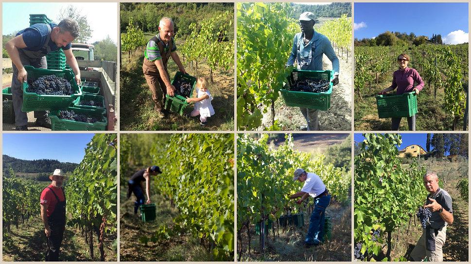 Vignano Harvest