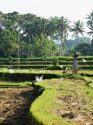 View at The Shala Bali