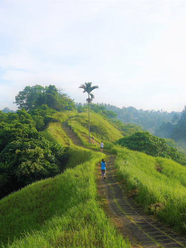 The Campuhan Ridge