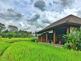 Yoga Shala with rice paddy fields view