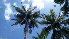 Coconut Trees.mp4