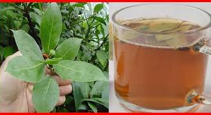 BAY leaves: BENEFITS,TEAS and NATURAL MEDICINAL USES