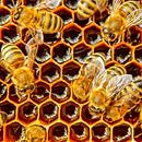 miel cire abeille