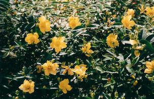 봄이랑 당신이랑
