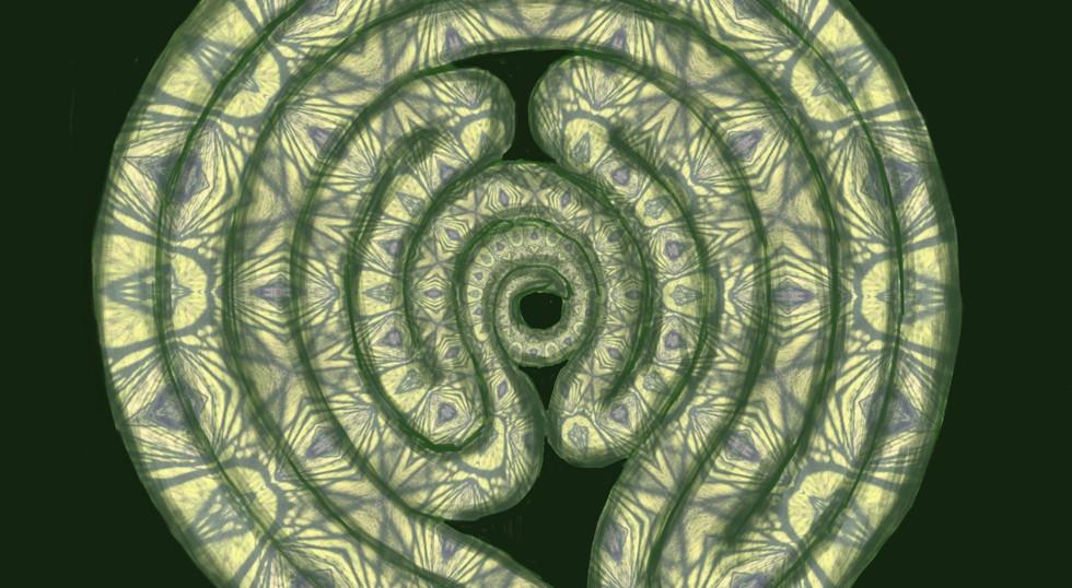 Labyrinth: snake, 2020