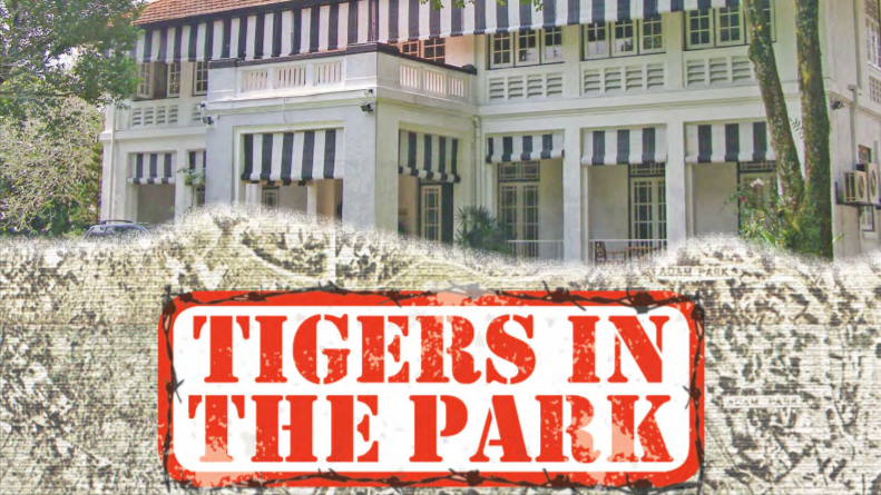 Tigers in The Park