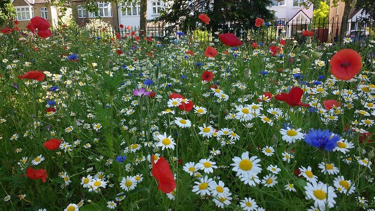Kendor Wild Flowers Dorset End June 21.j