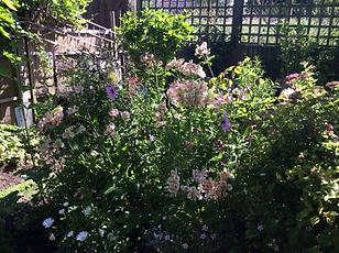 Aylward Road garden 3.JPG