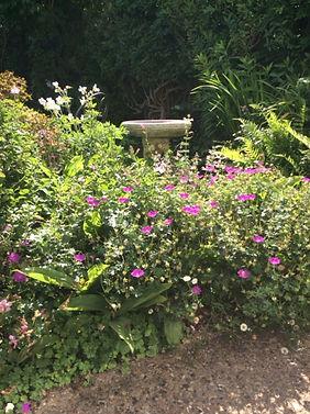 Aylward Road garden 1.JPG