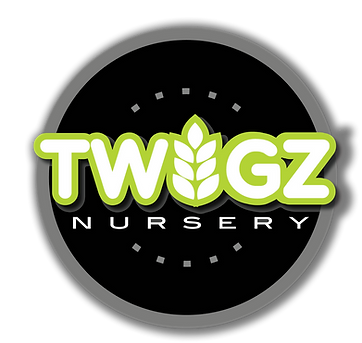 Hybrid willow and Poplar Trees Twigs Nursery Logo