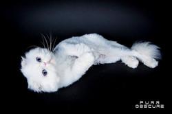 Foldex Cats Cattery | Paris |