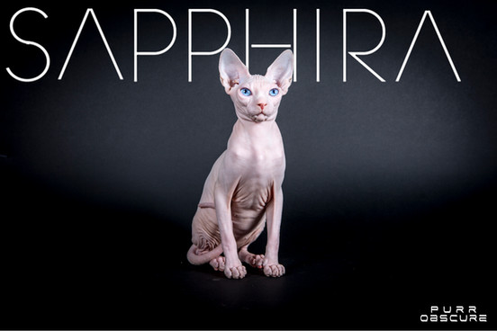 SAPPHIRA SPHYNX QUEEN BLUE EYES
