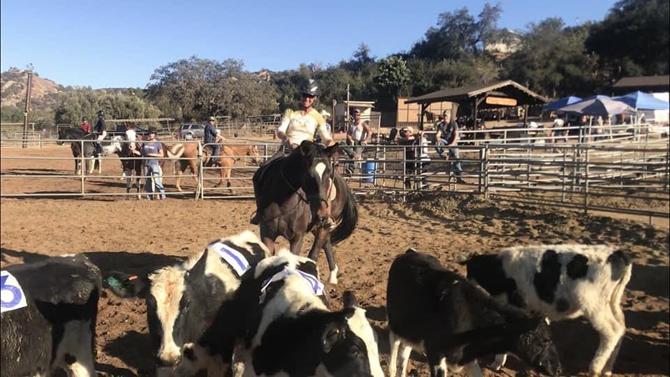 Roscoe cows