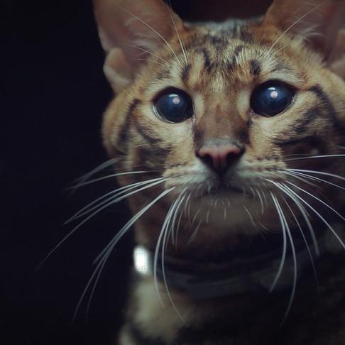 ФОРЕСТО: Как мы отправили кота на поиски приключений в ночной летний лес днем в начале марта