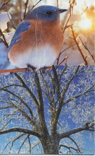 Big Bird - Little Tree