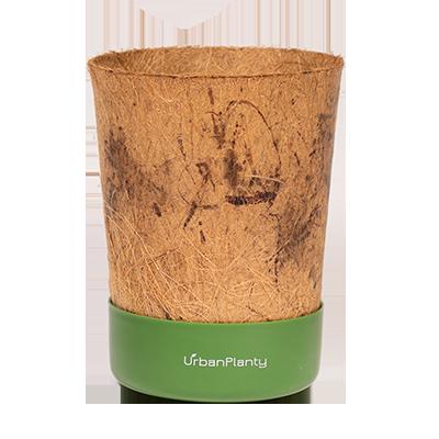 Coconut Pot | Olive