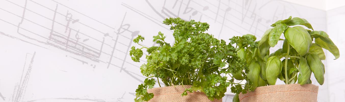 Urban Planty shop, accessories for urban gardening