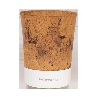 Vaso di cocco (Bianco)