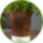 Coconut_pot_urban_planty_round.png