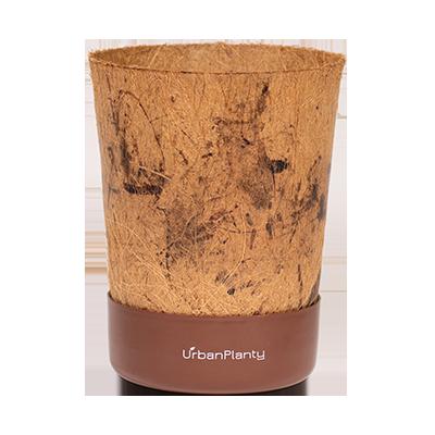 Coconut Pot | Coco