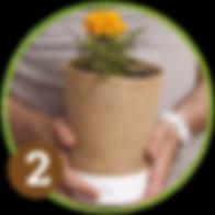 flower pot, unique design