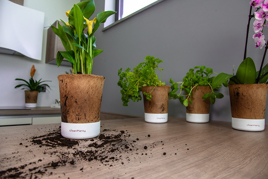Urban_Planty_coconut_pots_for_herbs_flowers