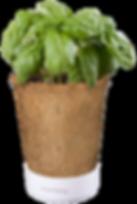kokosov_lonček_končna_600x300.png