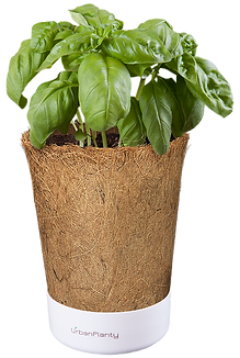 Coconut_pot_urban_planty_vertical_garden