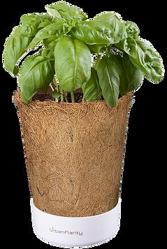 Coconut_pot_urban_planty_vertical_garden