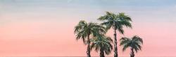 Panoramic_Sunset_Palms