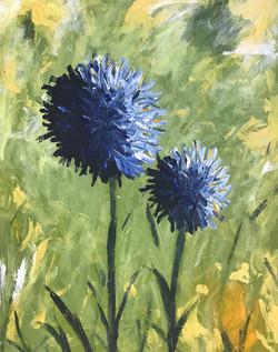 Blue_Allium_Flowers