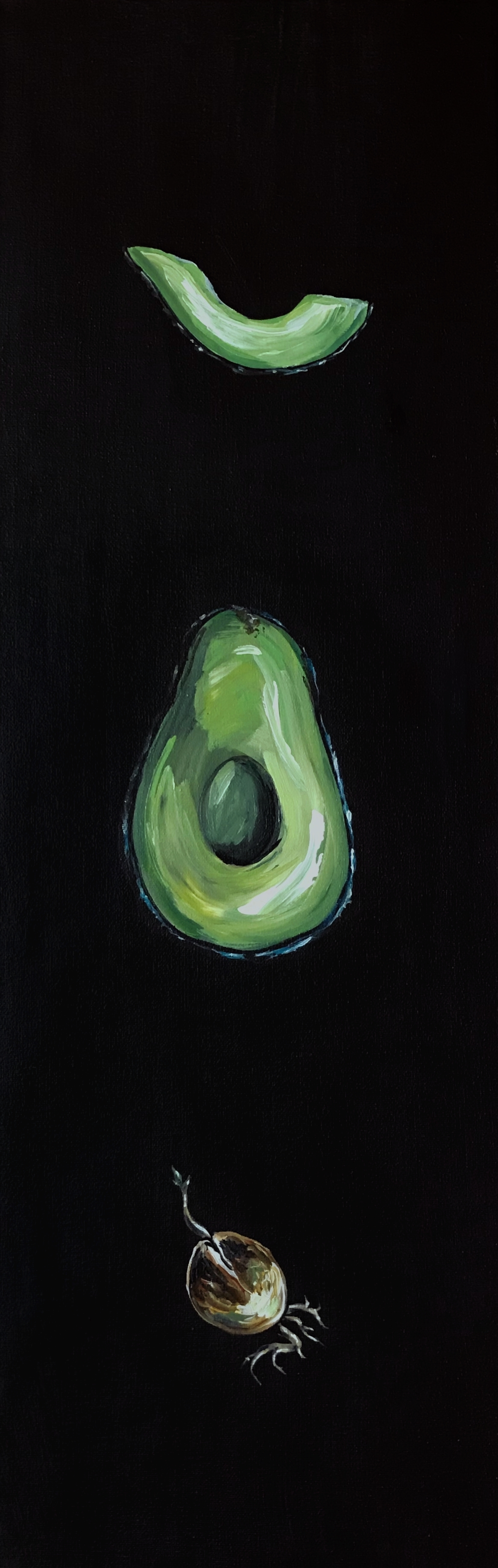Avocado_Anatomy