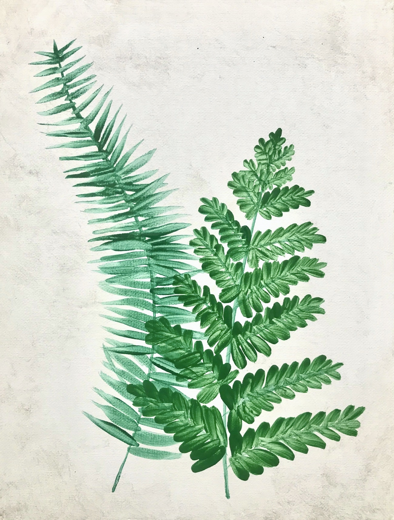 Fresh_Ferns